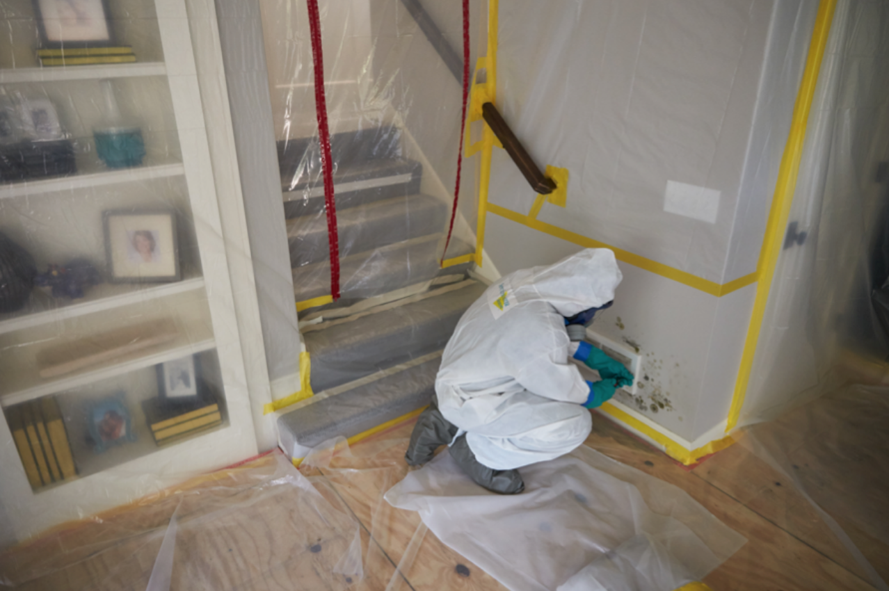 mold-mitigation-nw-colorado-steamboat