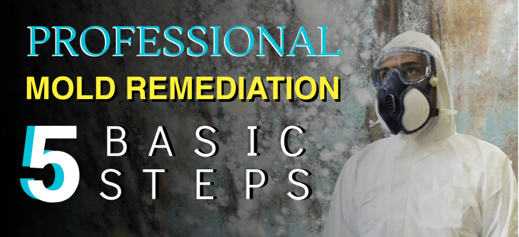5 Basic Steps for Professional Mold Remediation