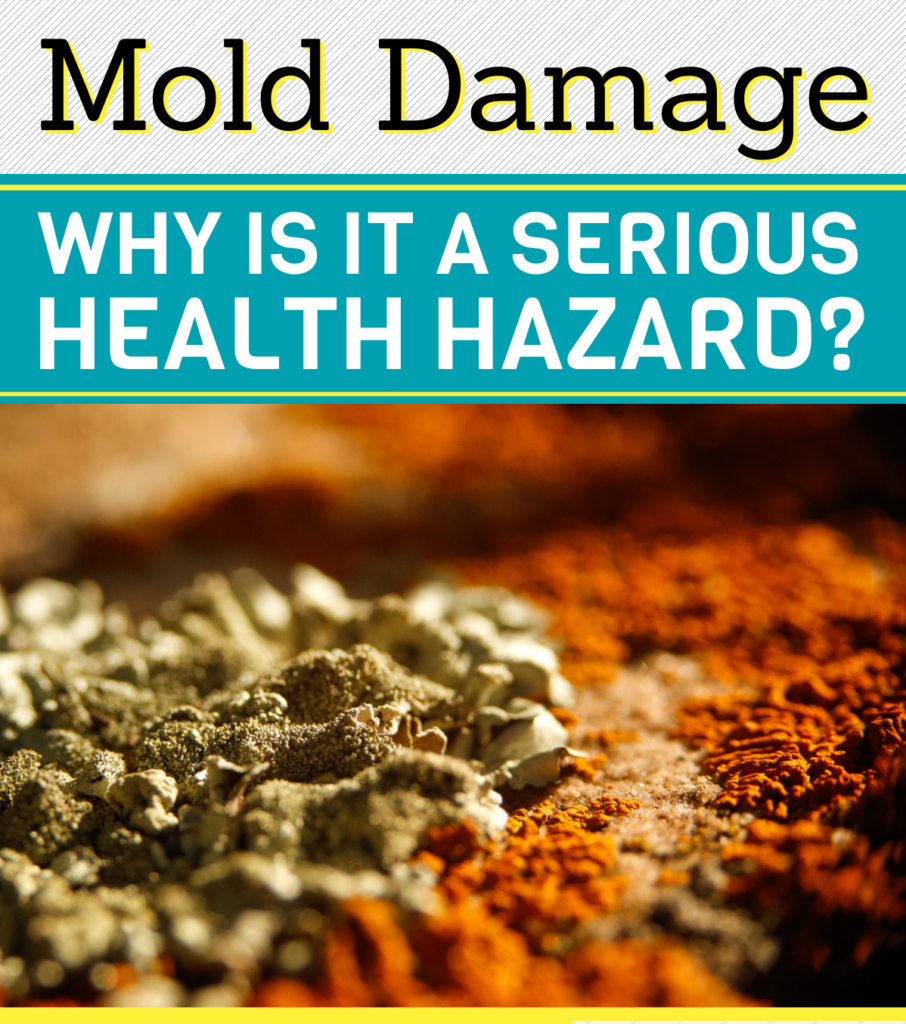 Mold Damage Why Is It A Serious Health Hazard