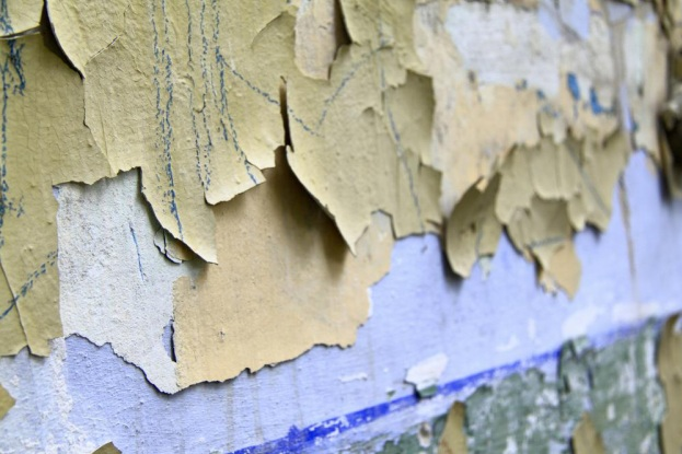 4 Signs your Home has a Mold Infestation Problem