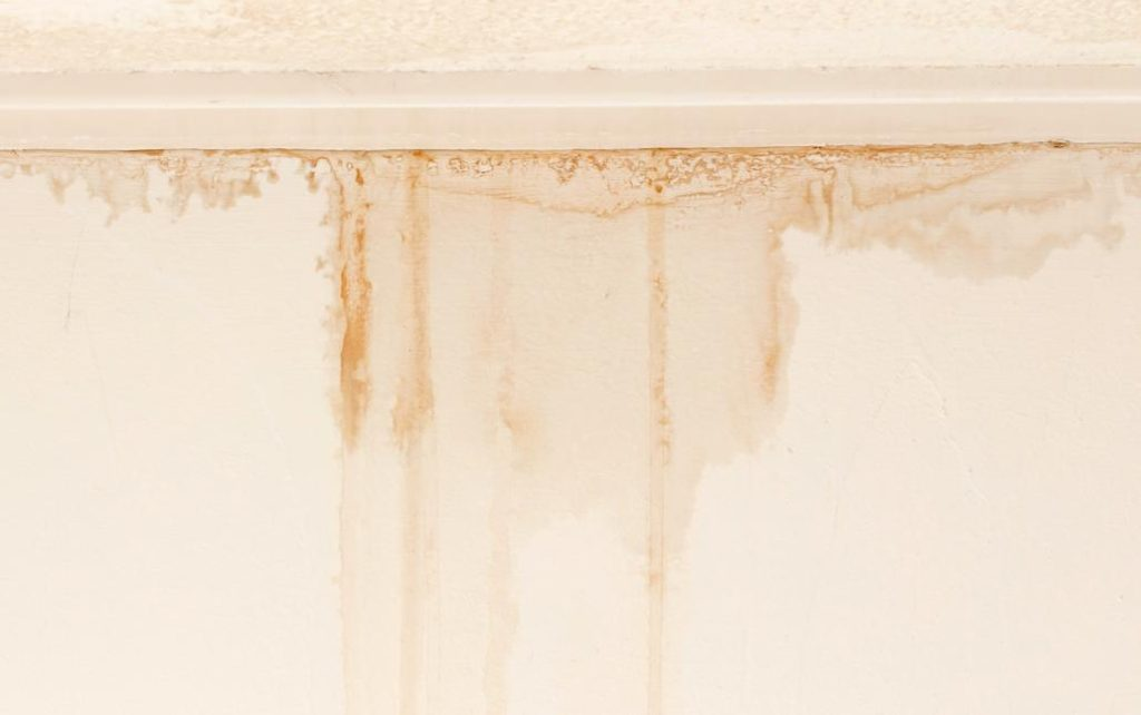 How To Check For Mold Infestations Before Buying A Home