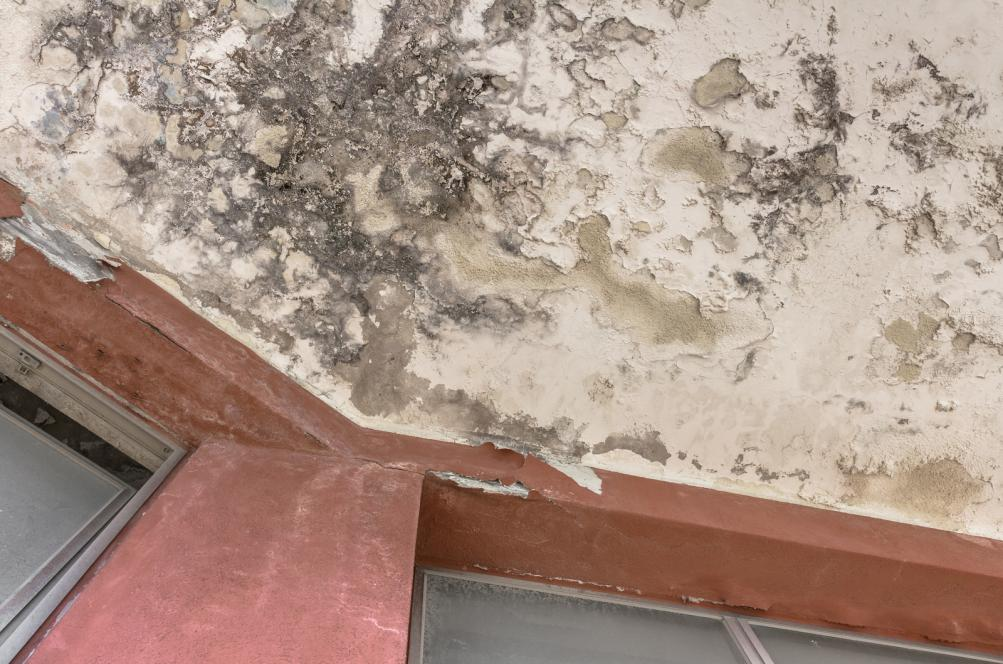 Black mold growing on the ceiling as a result of water damage