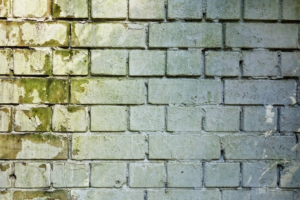 a while brick wall with green mold growth