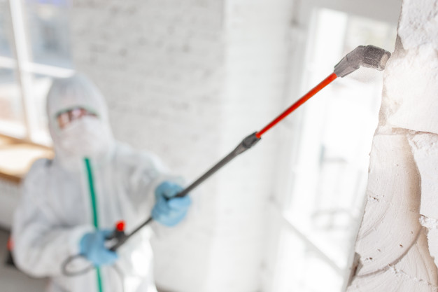 a mold removal company removing mold from a wall